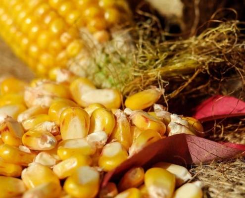 Рецепт кукурузных оладий с зеленью и специями