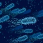 Война микробов или что делать после приема антибиотиков