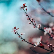 Как справиться с сезонной аллергией без антигистаминных средств